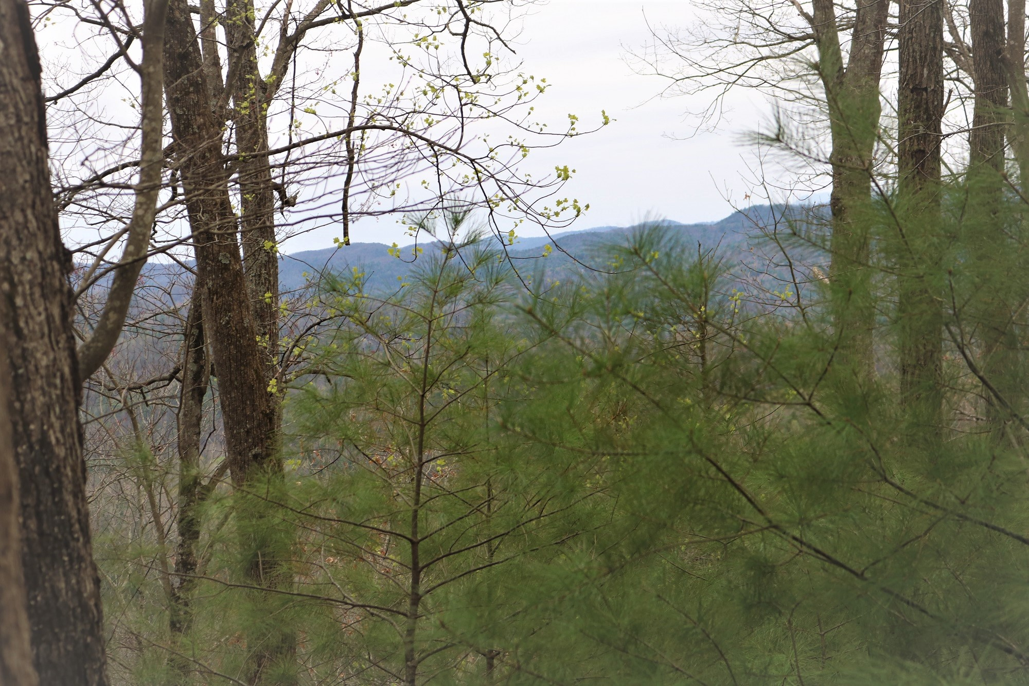 LOT 7B LEATHERWOOD MOUNTAIN ON GRANNY'S RIDGE RD. FERGUSON, NC 28624
