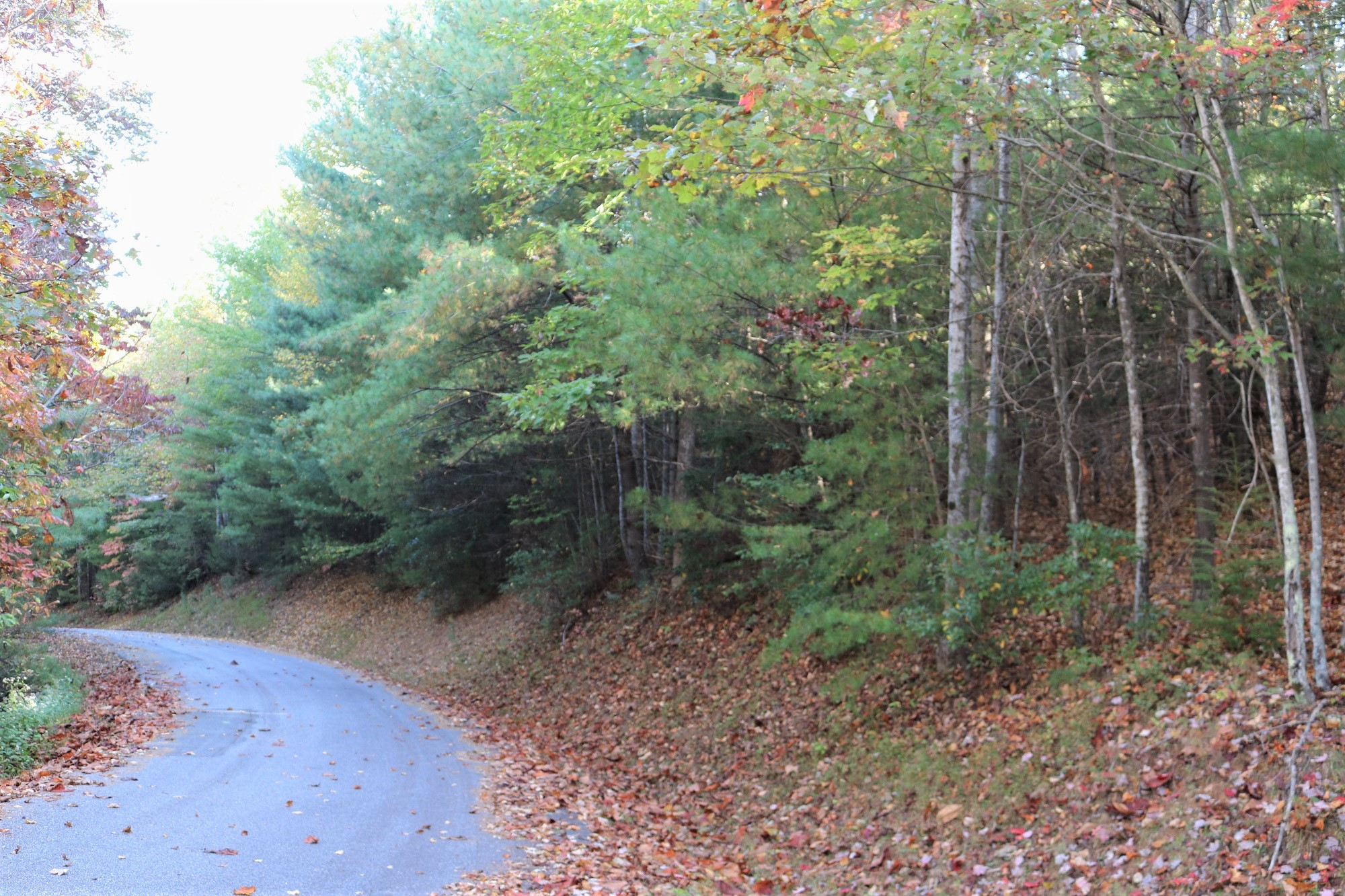 19 ACRES OF MOUNTAIN LAND AVAILABLE IN FOOTHILLS OF NC WITH CREEK 310 Fox Cove Rd.